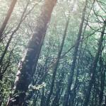 Resultados ecológicos gracias a la innovación